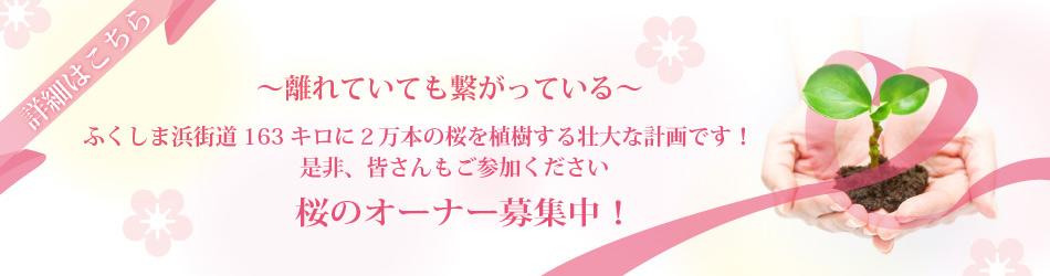 桜のオーナー募集中!
